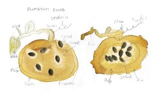 pumpkinrendered copy
